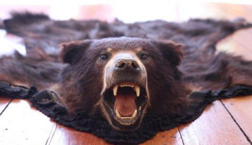 ゆぽぽ付近に熊出没!もし遭遇したら…【逃走&撃退方法】